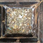 birds nests removed