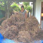we remove all bird nests
