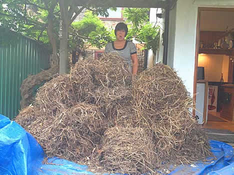 we remove all bird nests