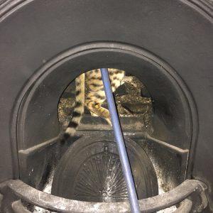 cat in chimney